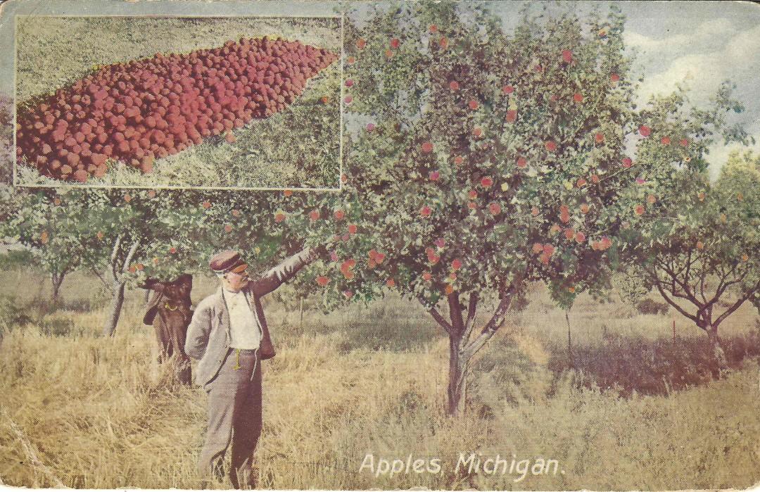 Apples in Michigan