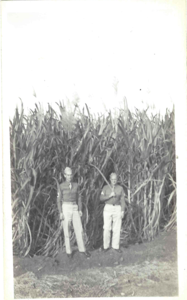 roll460-elvin-bert-in-the-sugarcane