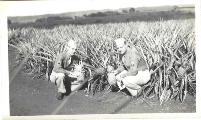 roll460-elvin-bert-pineapple-field