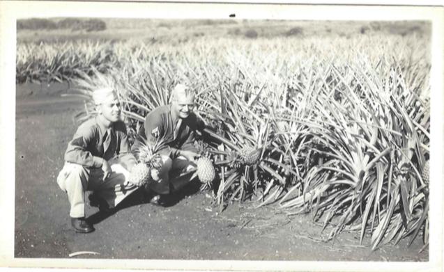 roll460-me-bert-pineapple-field
